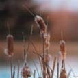 aquatic_weed